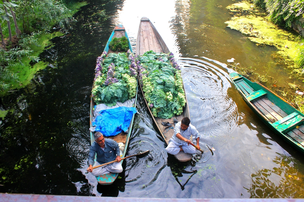 Two vegetable vendors rowing in the back waters of Dal Lake.